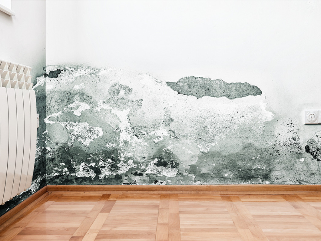 How can you prevent mold?